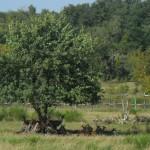 SAM 3160 150x150 Hü und Hott in der Heide